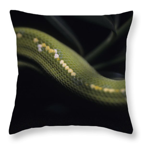A Close View Of An Immature Green Tree Throw Pillow by Taylor S. Kennedy