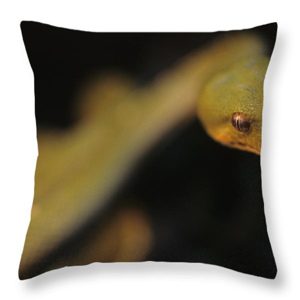 A Curious Immature Green Tree Python Throw Pillow by Taylor S. Kennedy