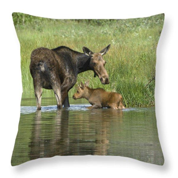 A Family Affair Throw Pillow by Sandra Bronstein