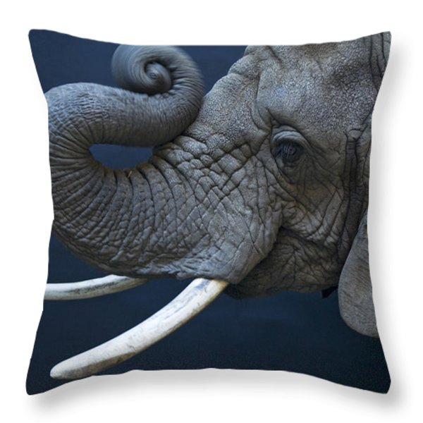 A Female African Elephant, Loxodonta Throw Pillow by Joel Sartore