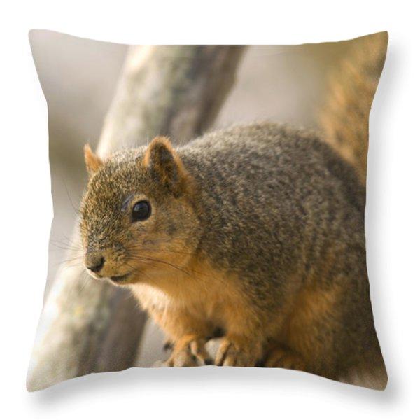 A Fox Squirrel Sciurus Niger Perches Throw Pillow by Joel Sartore