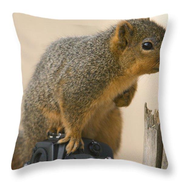 A Fox Squirrel Sciurus Niger Sits Throw Pillow by Joel Sartore