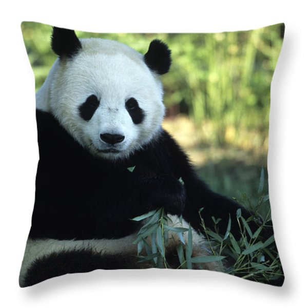 A Giant Panda Eating Bamboo Throw Pillow by Taylor S. Kennedy
