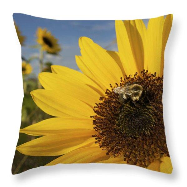 A Honey Bee Visiting A Sunflower Throw Pillow by Tim Laman