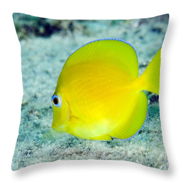 A Juvenile Blue Tang Searching Throw Pillow by Terry Moore