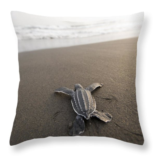 A Leatherback Sea Turtle Hatchling Throw Pillow by Joel Sartore