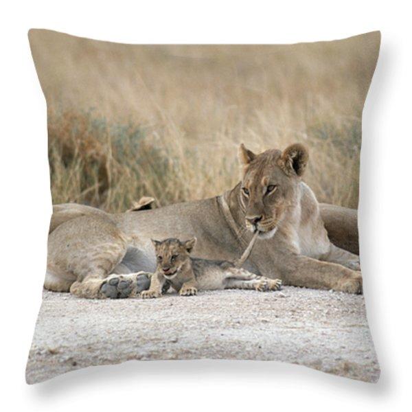 A Lioness Mouths A Cubs Tail To Keep Throw Pillow by Des &Amp Jen Bartlett
