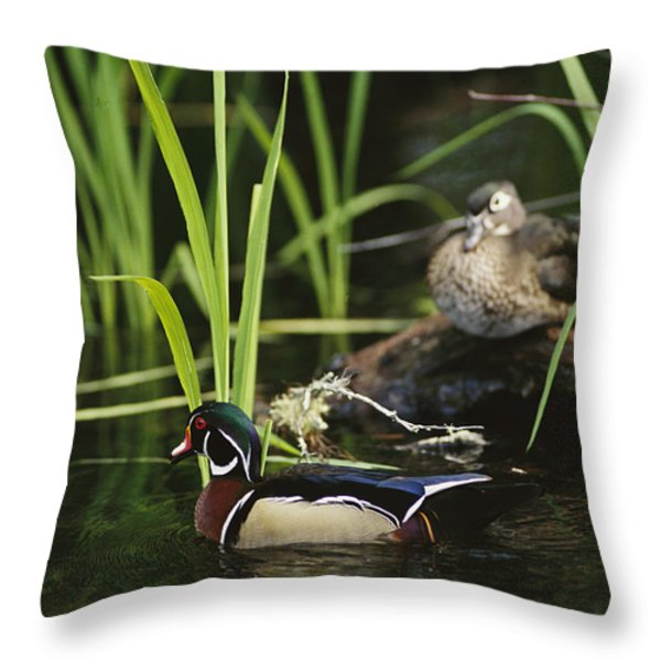A Male Wood Duck Swims Past Its Mate Throw Pillow by Raymond Gehman