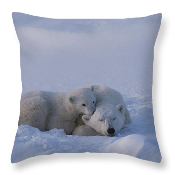 A Polar Bear Cub Ursus Maritimus Rests Throw Pillow by Tom Murphy