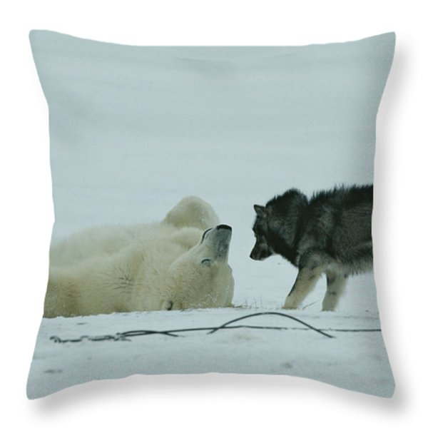 A Polar Bear Lolls On His Back While Throw Pillow by Norbert Rosing