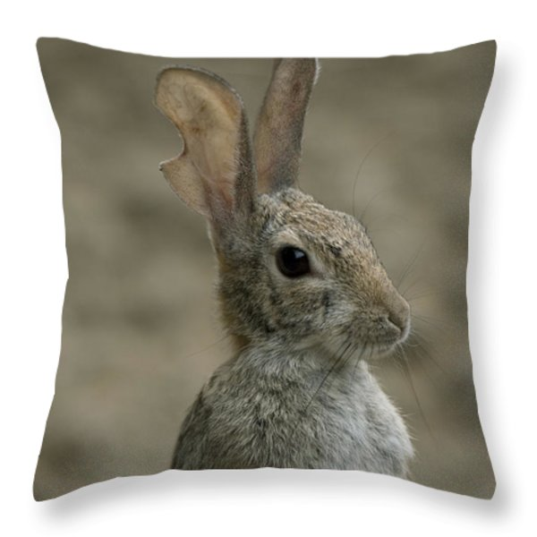 A Rabbit From The Omaha Zoo Throw Pillow by Joel Sartore