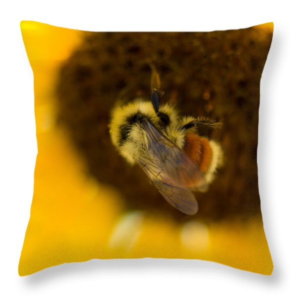 A Sunflower And Bumble Bee In Eastern Throw Pillow by Joel Sartore