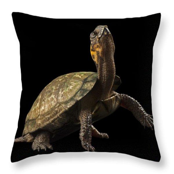 A Threatened Bog Turtle At Zoo Atlanta Throw Pillow by Joel Sartore