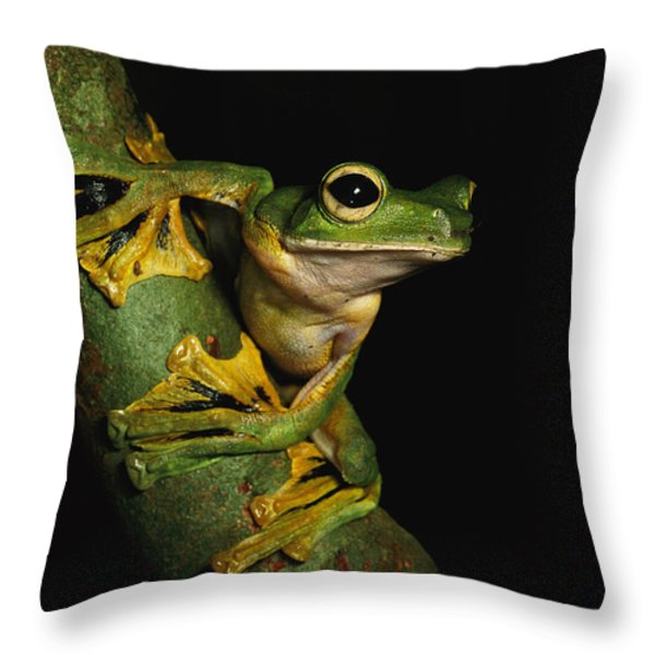 A Wallaces Flying Frog Throw Pillow by Tim Laman