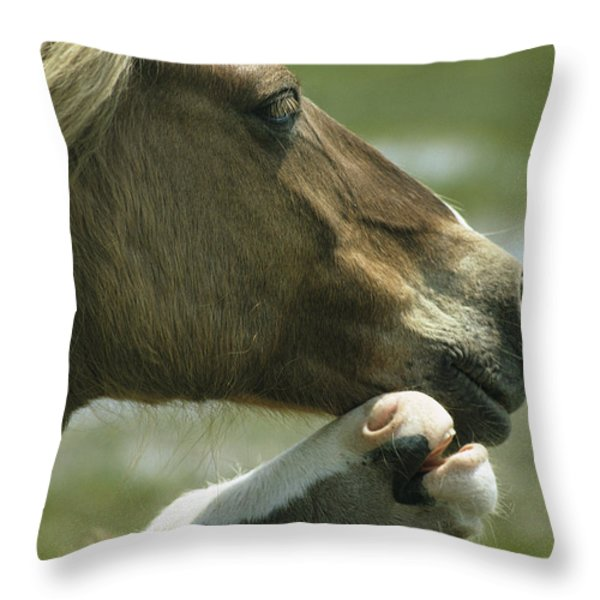 A Wild Pony Foal Nuzzling Its Mother Throw Pillow by James L. Stanfield