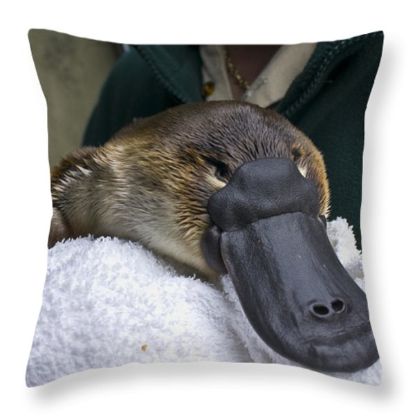 A Zookeeper Cradles A Platypus As Part Throw Pillow by Jason Edwards