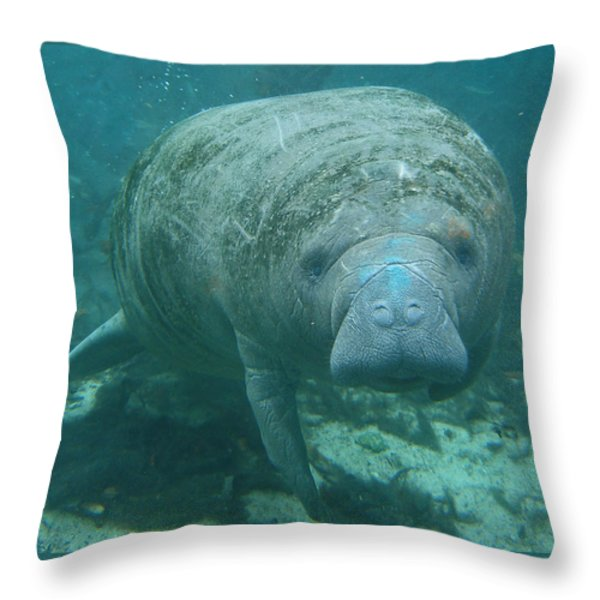 About To Meet A Manatee Throw Pillow by Kimberly Mohlenhoff