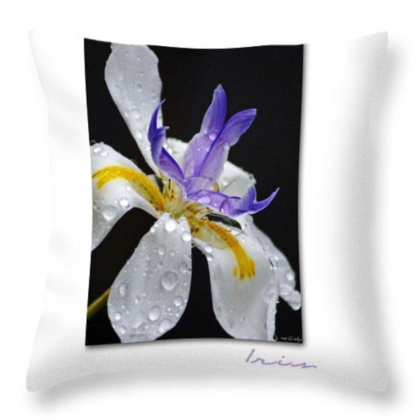 African Iris Throw Pillow by Holly Kempe