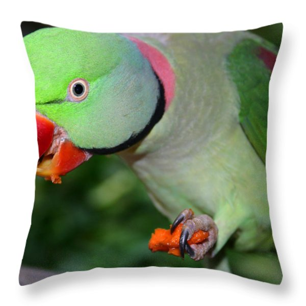 Alexandrine Parrot Feeding Throw Pillow by Ralph A  Ledergerber-Photography