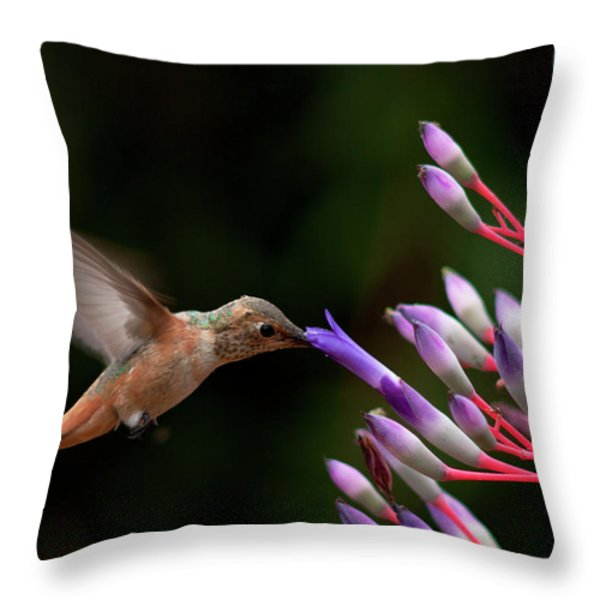 Allen's Hummingbird At Breakfast Throw Pillow by Mike Herdering