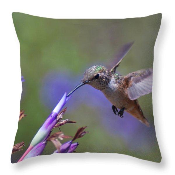 Allen's Hummingbird Throw Pillow by Mike Herdering