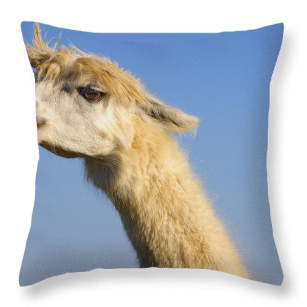 Alpaca Throw Pillow by Skip Hunt