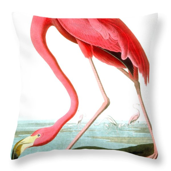 American flamingo painting - photo#18