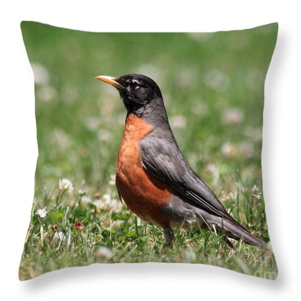 American Robin Throw Pillow by Wingsdomain Art and Photography