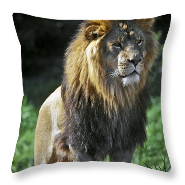 An Alert, Majestic Lion With An Throw Pillow by Jason Edwards