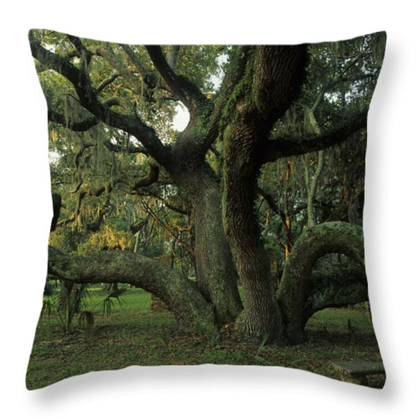 An Old Live Oak Draped With Spanish Throw Pillow by Michael Melford