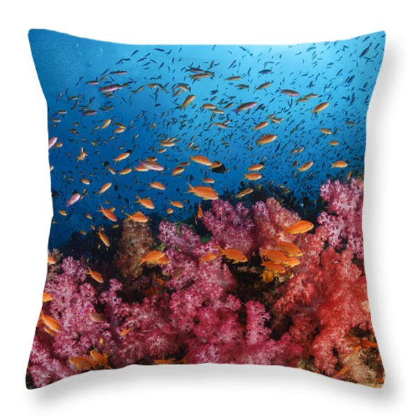 Anthias Fish And Soft Corals, Fiji Throw Pillow by Todd Winner
