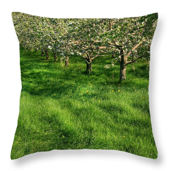 Apple orchard Throw Pillow by Sandra Cunningham