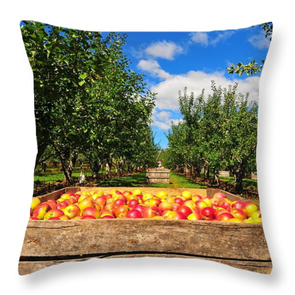 Apple Picking Season Throw Pillow by Catherine Reusch  Daley