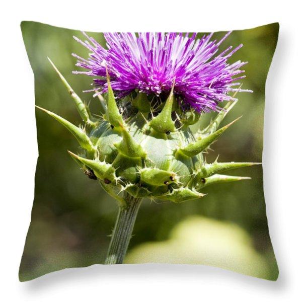 Artichoke Thistle 3 Throw Pillow by Kelley King