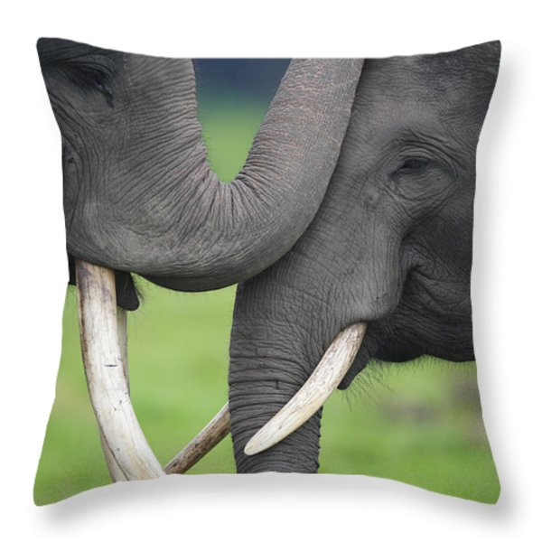 Asian Elephant Greeting Throw Pillow by Cyril Ruoso