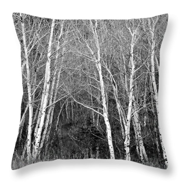 Aspen Forest Black And White Print Throw Pillow by James BO  Insogna