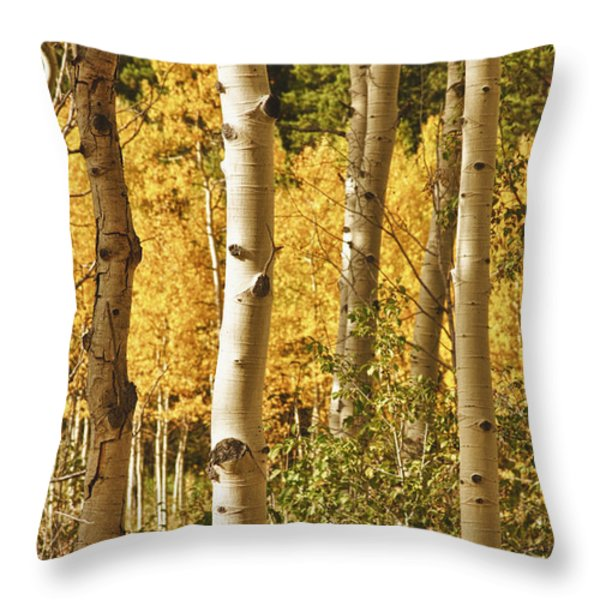 Aspen Gold Throw Pillow by James BO  Insogna