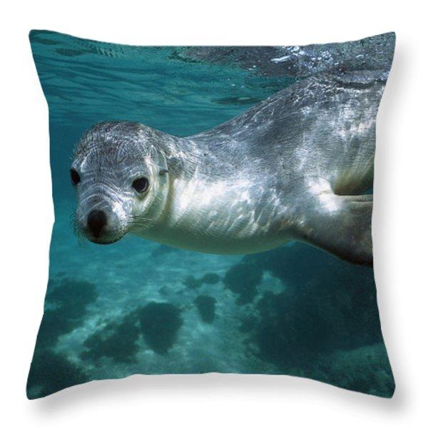 Australian Sea Lion Neophoca Cinerea Throw Pillow by Hiroya Minakuchi