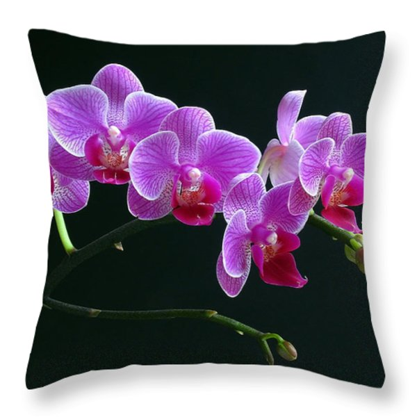 Baby Bloomers Throw Pillow by Juergen Roth
