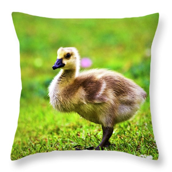 Baby Face Throw Pillow by Scott Pellegrin