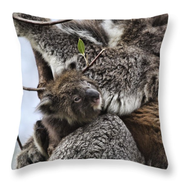 Baby Koala V2 Throw Pillow by Douglas Barnard