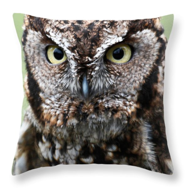 Baby Owl Eyes Throw Pillow by Athena Mckinzie