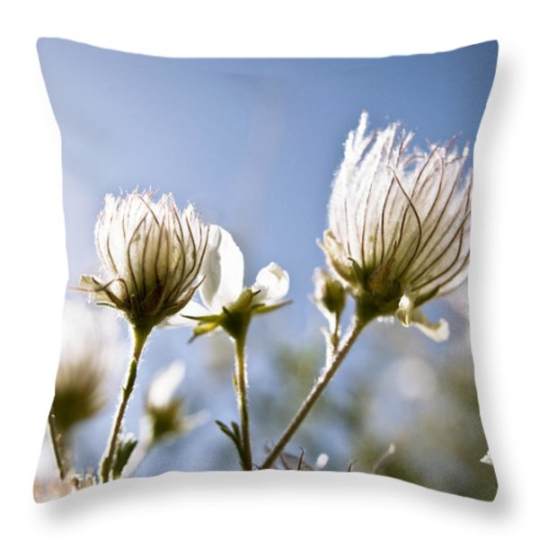 Backlit Fuzzy Flower Throw Pillow by Ray Laskowitz - Printscapes