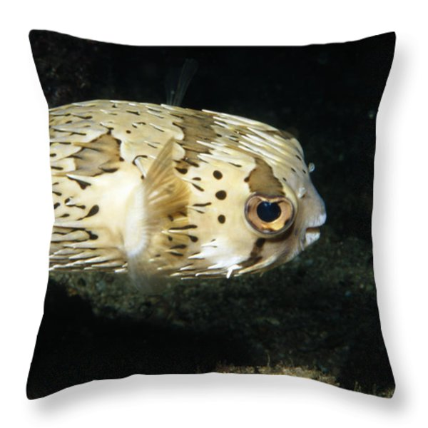 Balloonfish Profile Puffer Fish, Diodon Throw Pillow by James Forte