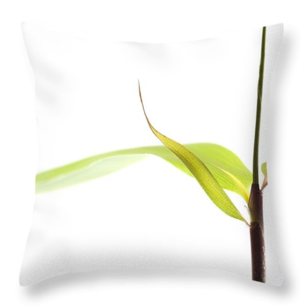 Bamboo Meditation 1 Throw Pillow by Carol Leigh
