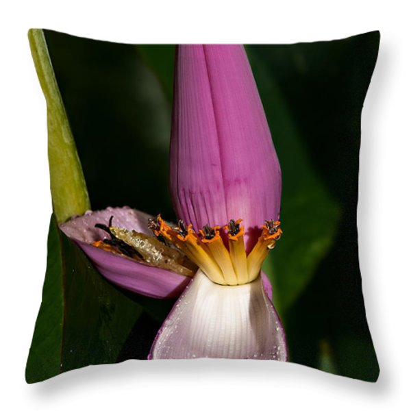 Banana Blossom Throw Pillow by Christopher Holmes