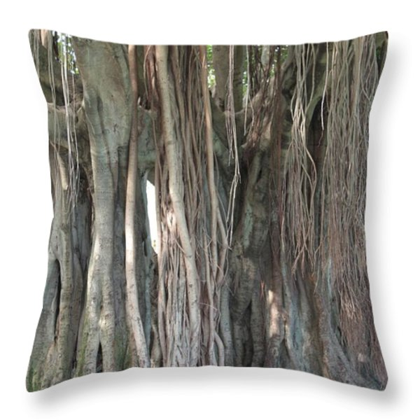 Banyan Tree Throw Pillow by Carol Groenen