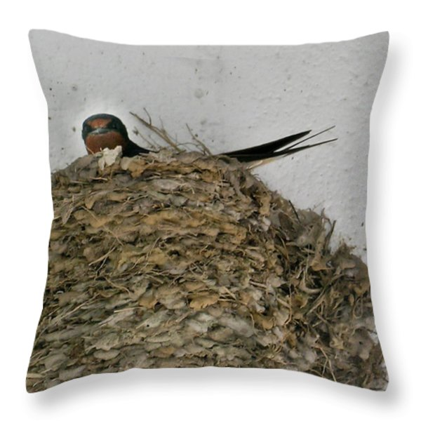 Barn Swallow Hirundo rustica Throw Pillow by Douglas Barnett