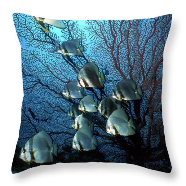 Batfish And Sea Fan, Papua New Guinea Throw Pillow by Beverly Factor