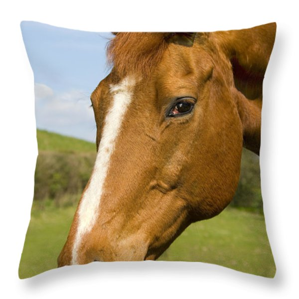 Beautiful Horse Portrait Throw Pillow by Meirion Matthias